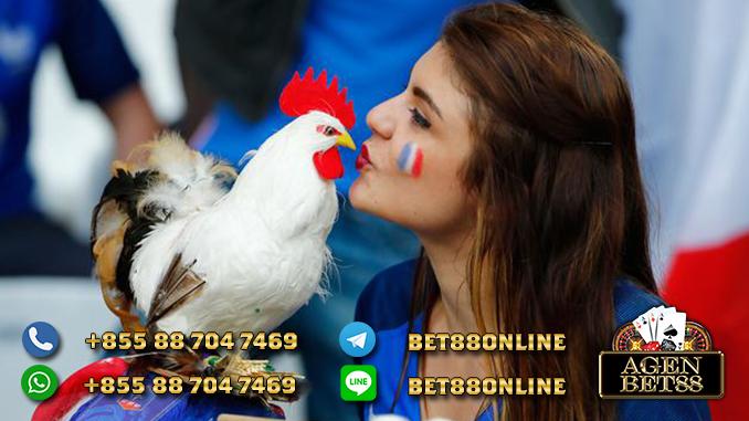 AyamS128 Asia